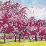 Cherry Blossom - The Meadows