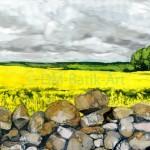 Oilseed Crop at Duns