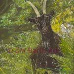Scottish Mountain Goat